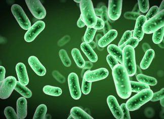 Diệp lục tố - Chlorophyll